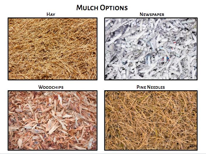 Mulch options for gardening