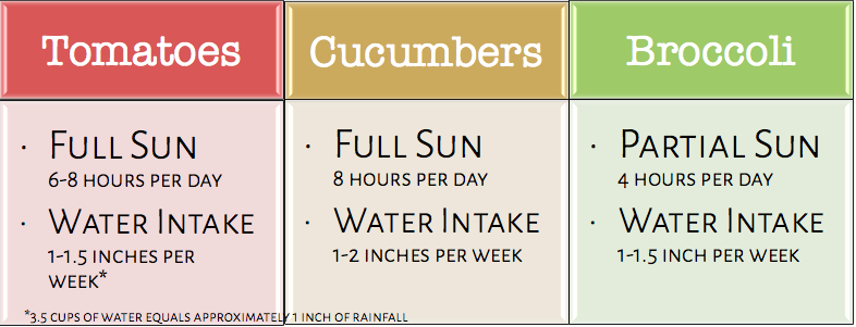 Sun and water recommendations for tomatoes, cucumbers, and broccoli