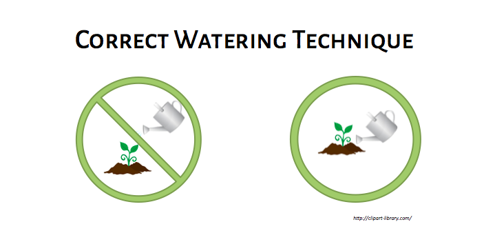 Correct watering technique for gardening